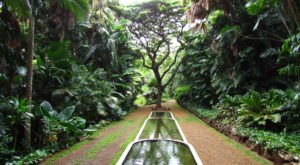 The Secret Garden In Hawaii You're Guaranteed To Love