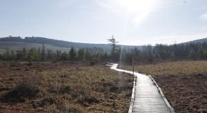 This Mystifying Bog Is A Little-Known Gem That Makes You Forget You're In West Virginia