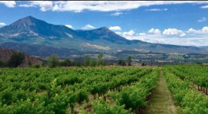 The Remote Winery In Colorado That's Picture Perfect For A Day Trip