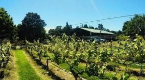 The Remote Winery In Hawaii That's Picture Perfect For A Day Trip