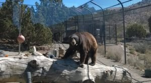 You'll Never Forget A Visit To This One Of A Kind Animal Sanctuary In Nevada