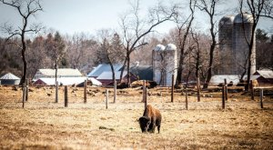 You'll Never Forget A Visit To This One Of A Kind Buffalo Ranch In New Jersey