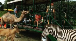 See Over 150 Animals At Aikman Wildlife Adventure, A Lovely Family Day Trip Destination In Illinois