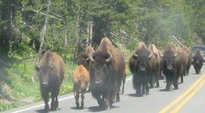 11 Things Wyomingites Do That Seem Insane To Everyone Else