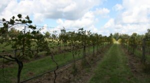 The Remote Winery In New Orleans That's Picture Perfect For A Day Trip