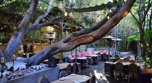 A Treehouse Restaurant In Southern California, Cliff's Edge, Is Downright Enchanting