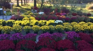 This Majestic Flower Farm In Kansas Is All You Need For Spring