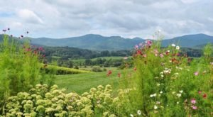 The Remote Winery In Virginia That's Picture Perfect For A Day Trip