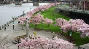 What Happens Along This Gorgeous Waterfront Park In Oregon Every Spring Is Downright Magical