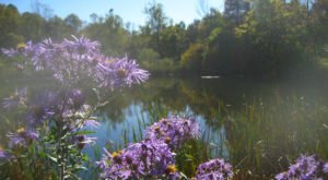 It's Impossible Not To Love This Breathtaking Wildflower Trail In Indiana