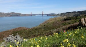 10 Picnic Perfect San Francisco Hikes That Will Make Your Spring Complete