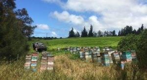 The Enchanting Hawaiian Farm That's Anything But Ordinary