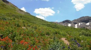 A Trip To Colorado's Neverending Wildflower Field Will Make Your Spring Complete