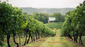 The Remote Winery In Missouri That's Picture Perfect For A Day Trip