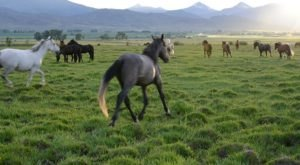 Not Many People Know About This Wild Horse Sanctuary Right Here In Idaho