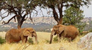 You'll Never Forget A Visit To This One Of A Kind Elephant Ranch Near San Francisco