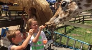 Visit Aloha Safari Zoo, An Exotic Animal Sanctuary Right Here In North Carolina