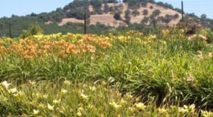 The Gorgeous Flower Farm In Northern California That Will Take Your Breath Away