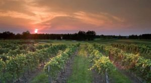 The Remote Winery In New Jersey That's Picture Perfect For A Day Trip