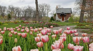 A Trip To Indiana's Neverending Tulip Field Will Make Your Spring Complete