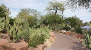 The Largest Botanical Cactus Garden In The Southwest Is Right Here In Nevada And It's Mesmerizing