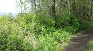 The Hiking Trail Hiding In Portland That Will Transport You To Another World