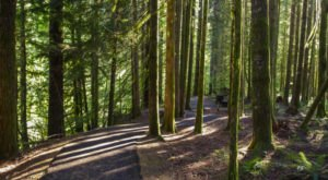 This Extraordinary Forest Hike In Oregon Is One Of A Kind