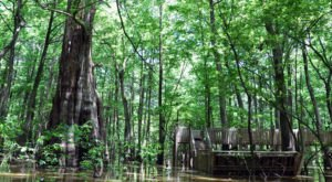 Most People Have No Idea This Incredible Natural Wonder Is Hiding Right Here In Mississippi