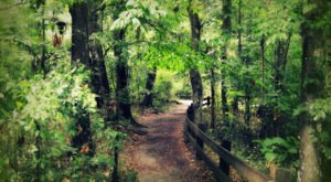 The 7 Gorgeous Hikes Everyone In Florida Must Complete
