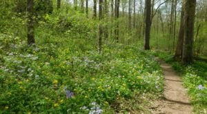 It's Impossible Not To Love This Breathtaking Wild Flower Trail In Illinois