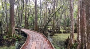 12 Of The Most Breathtaking Trails In Louisiana You Have To See