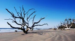 The Top Secret Beach In South Carolina That Will Make Your Summer Complete