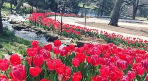 A Trip To Nashvillie's Neverending Flower Fields Will Make Your Spring Complete
