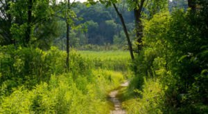 8 Amazing Indiana Hikes Under 3 Miles You'll Absolutely Love