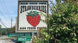 You'll Find The Most Mouthwatering Strawberries At These 7 Pick-Your-Own Farms In New Hampshire