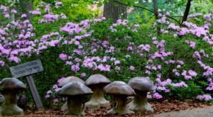 Most People Have No Idea There's A Fairy Garden Hiding In Delaware And It's Magical