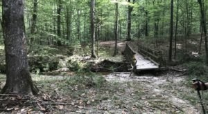 Louisiana's Longest Hiking Trail Will Show You A Completely Different Side To The State