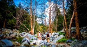 The Shady Forest Hike In Southern California Where You Can Cool Off On A Hot Summer Day
