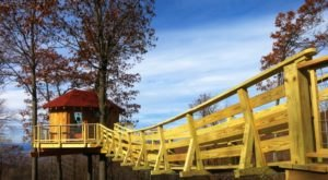 6 Amazing Treetop Adventures You Can Only Have In Pittsburgh
