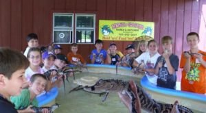 The One-Of-A-Kind Louisiana Alligator Ranch You Need To Visit At Least Once