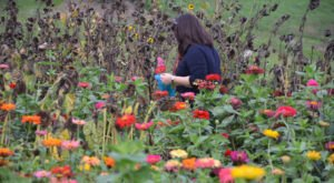A Trip To Pittsburgh's Neverending Wildflower Field Will Make Your Spring Complete