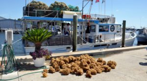 11 Reasons To Drop Everything And Visit The Last Great Sponging Town In Florida