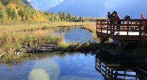 This Gorgeous Nature Center In Alaska Is Right In Your Backyard