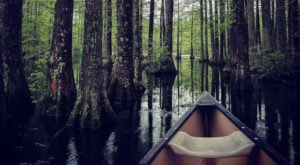 Here's Delaware's Top Outdoor Attraction And You'll Definitely Want To Do It