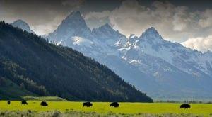 This Epic Wyoming Wild West Safari Belongs On Your Bucket List