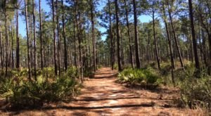 This Just Might Be The Most Underrated Hike In All Of Mississippi