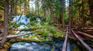 This Secluded Spring-Fed Waterfall Hiding In The Oregon Forest Will Make You Believe In Magic