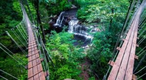 7 Amazing Treetop Adventures You Can Only Have In North Carolina