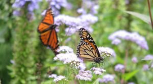 You'll Want To Plan A Day Trip To Delaware's Magical Butterfly House
