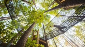 The Awesome Treetop Adventure In North Carolina Everyone Will Love
